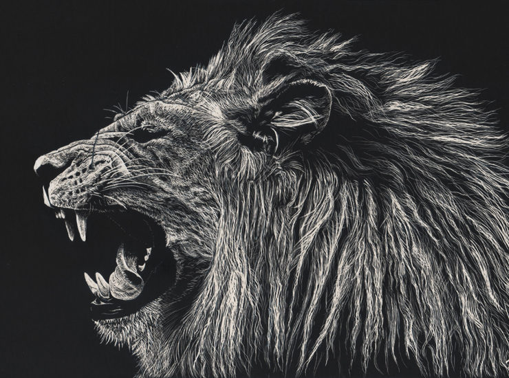 Scratchboard - lion - reference photo by Sooper Photography on deviantart